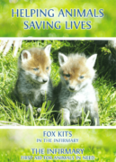 HELPING ANIMALS – SAVING LIVES. Fox Kits and The Infirmary