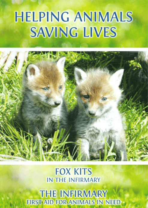 HELPING ANIMALS - SAVING LIVES. Fox Kits and The Infirmary