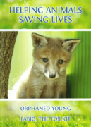 HELPING ANIMALS – SAVING LIVES. Orphaned Young & Fabio, the Fox Kit