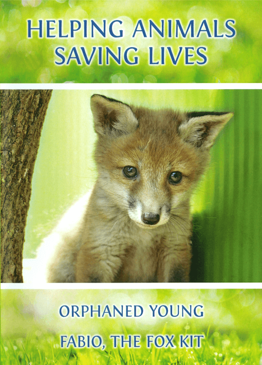 HELPING ANIMALS - SAVING LIVES. Orphaned Young & Fabio, the Fox Kit
